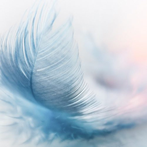 feather-3010848_1280