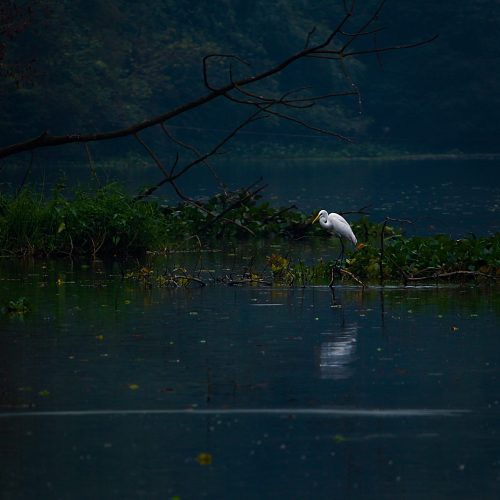 photo-of-a-heron-on-body-of-water-1649386